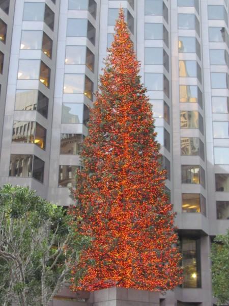 San Francisco Christmas Tree 2012