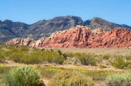 Desert Landscape at Red Rock Canyon, Nevada