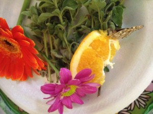 Feeding the butterflies fresh fruit.