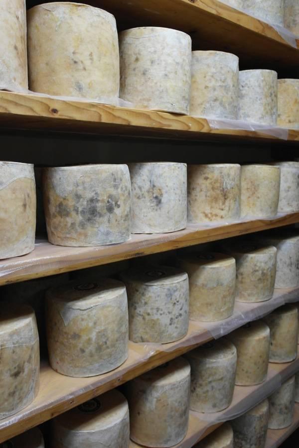 Bravo Farms Cheese Tasting Visalia 2