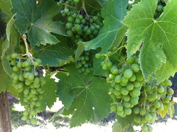 #Winetasting #centralcoast #KelseyWinery