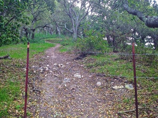 Wk 17 – Sycamore Crest Trail