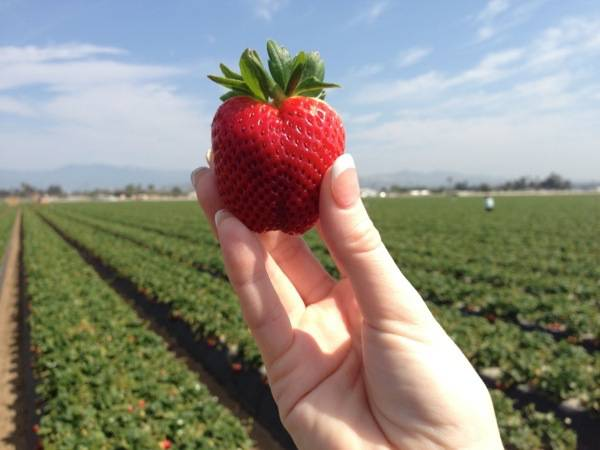 #JustAddStrawberries #California #Travel #spon