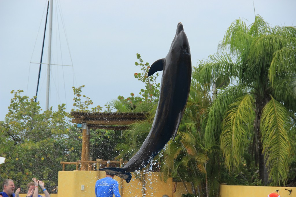 #PuertoVallarta #DolphinSwim #Travel #Honeymoon #Wedding #Carnival #FrankAndShannon